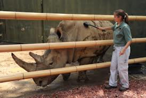 The Birmingham Zoo has close up looks at many wild animals like this Rhino. They actually have two rhinos.