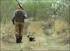 Gun Shy Dogs