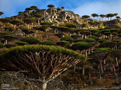 Blood Dragon Tree Forest