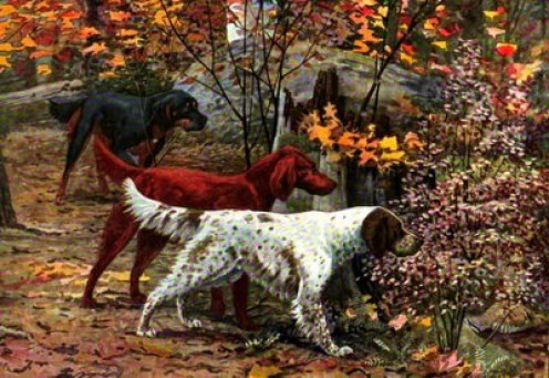 English Setter in Foreground