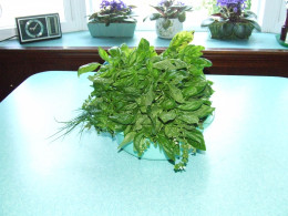 Freshly Cut, Basil, Chives and Oregano.