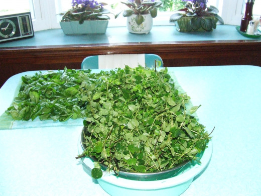 Fresh Oregano, Soaked 3 Times.