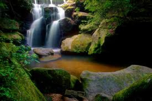 The Dismals In Phil Campbell, Alabama is a great place to picnic and take pictures. It has caves and waterfalls.