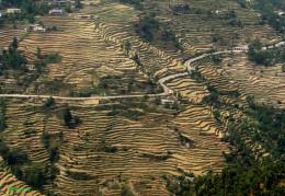 Step Farming Kedarnath