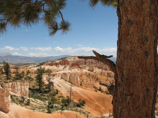 Bryce Canyon in Fall
