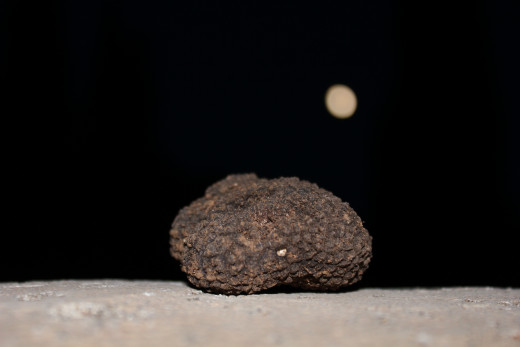 Moon rock? No. White Summer Truffle by the light of the moon.