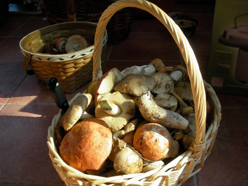 baskets of edible forest mushrooms