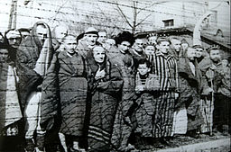 Prisoners still  alive at the Liberation of Auschwitz