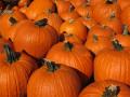 Easy Do It Yourself Halloween Costumes