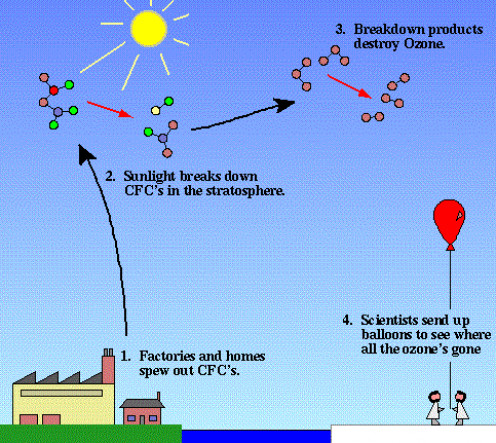 This is the life cycle of the CFCs; how they are transported up into the upper stratosphere/lower mesosphere, how sunlight breaks down the compounds and then how their breakdown products descend into the polar vortex.