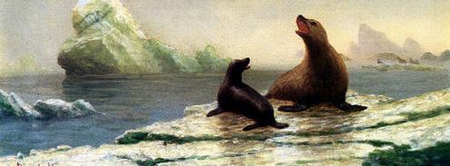 Seals in Morro Bay