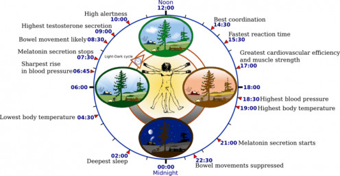 The pineal gland, circadian rhythms and the biological clock are all closely connected.