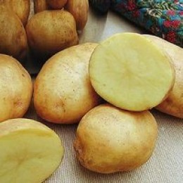 Yukon Gold potatoes have a natural butter flavor