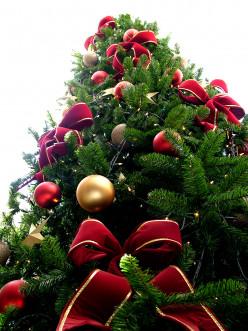 Pine Tree and Christmas Tree Crochet Patterns