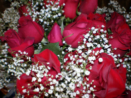 Red roses with white baby's breath.
