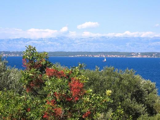 Island Ugljan, Croatia
