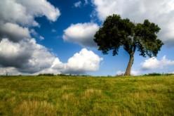 The Proud Tree (poem)