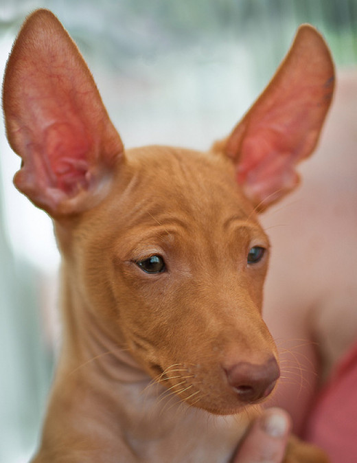 LOOK MA! NO EAR MITES