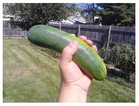 The best cucumber is a fresh cucumber!