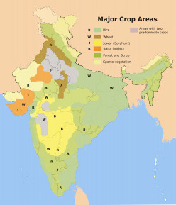 MAJOR CROP AREAS IN INDIA