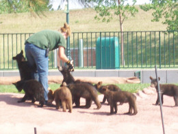 The Lady Ranger with the baby bears.