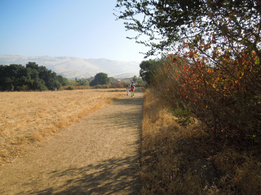 People Taking A Morning Walk in Montgomery Hill Park San Jose CA