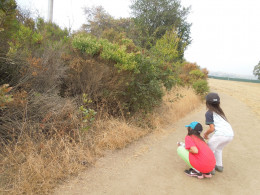 Kids Watching and Listening to Birds in Montgomery Hill Park San Jose CA