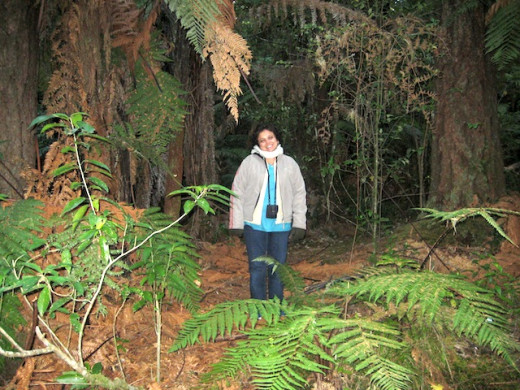 Inside the Redwood forest, Rotorua, North Island, New Zealand.