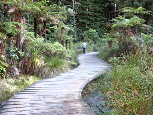Walkway into the Redwood forest, Rotorua.