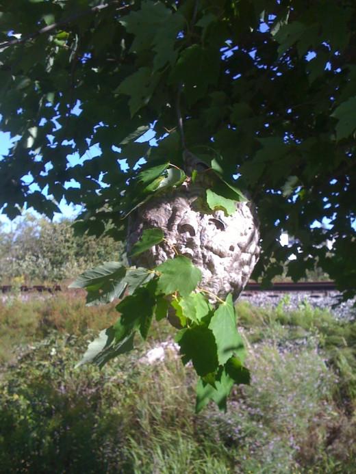 Hornets Nest.