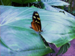 The butterflies in the Cockerell Butterfly Center are colorful.