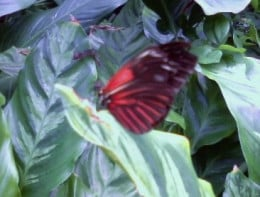 Many species of butterflies can be seen in the butterfly center.