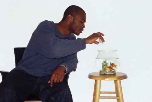 Man feeding fish