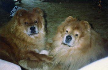 Bennie number 1 is on the left, He was 1 years old here And Barron - My first, was 11 years old. He passed 2 months after this picture.