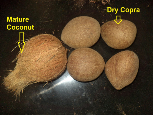 Mature coconut and Copra