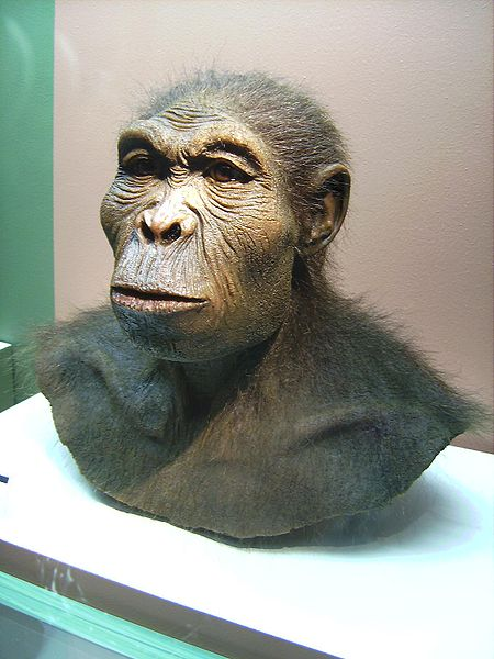 Homo habilis is known as 'The Handy Man' because it was the first hominid known to science that could actually make its own stone tools.