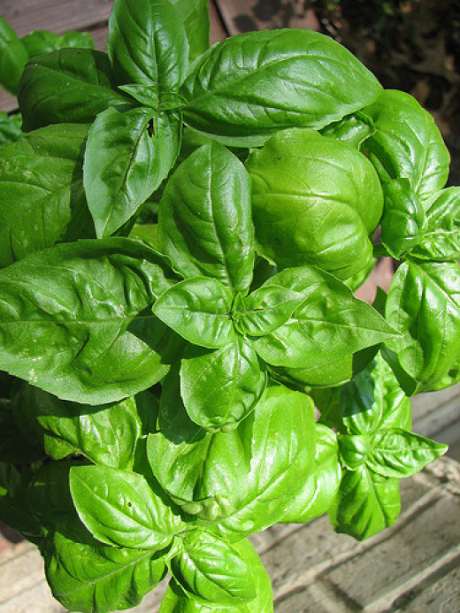 Fresh basil is a classic way to flavor tomato sauce
