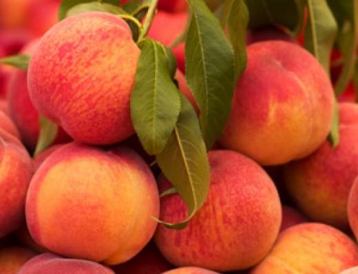Peaches (prunus persica)