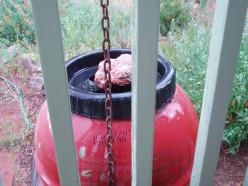 Catching rain with a rain barrel.