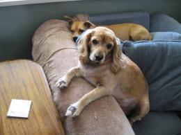 Sammy with his friend Poochie
