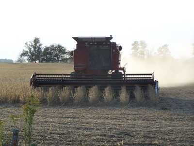 Soybeans harvesting