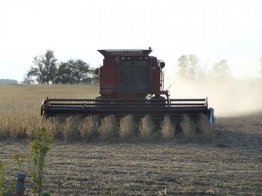 Soybeans harvesting