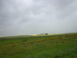 Canola field in the distance.