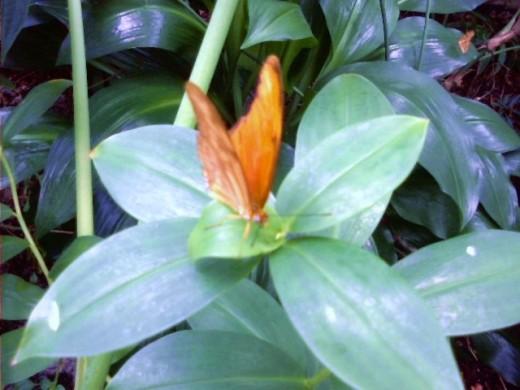 Cockerell Butterfly Center, Houston.