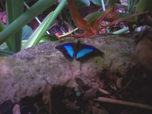 Cockerell Butterfly Center, Houston