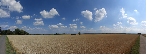 A wheat field shortly before harvest near Aachen and Orsbach, Germany