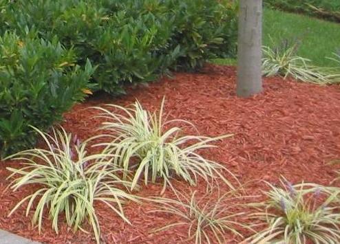 Mulch around plants.