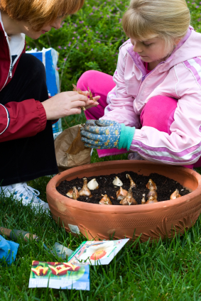 Fall is the perfect time to plants bulbs and enjoy beautiful blue flowers in your spring garden
