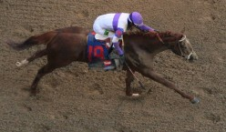Which Horse Will Be Three-Year-Old Of The Year For 2012?