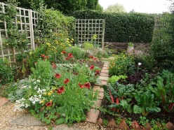 Small Garden Ideas on a Budget